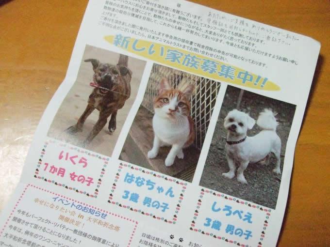 日本アニマルトラストさんから受領書が届きました。