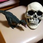 リアルなドクロ・頭蓋骨模型