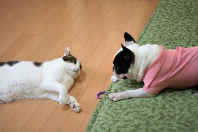 動物虐待断固反対